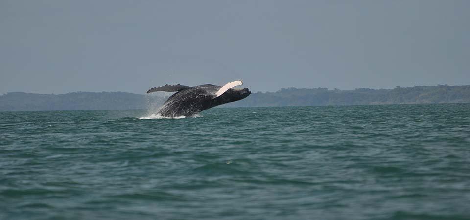 baleines-saintemarielodge-madagascar-1