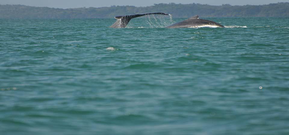 baleines-saintemarielodge-madagascar-5