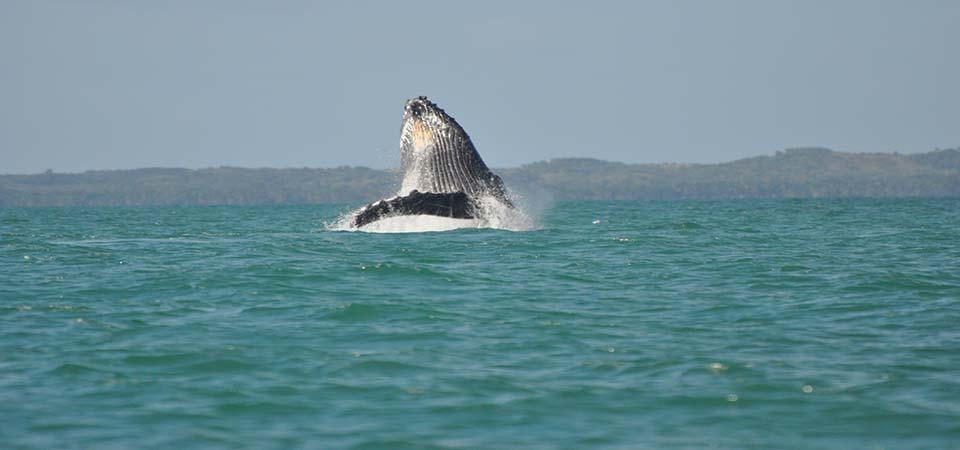 baleines-saintemarielodge-madagascar-6