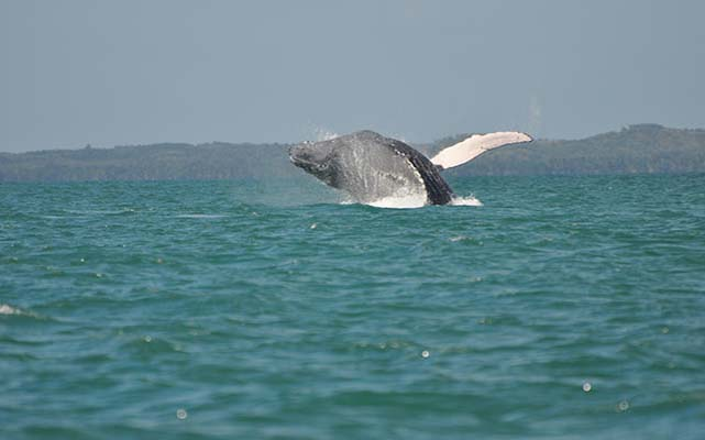 safari-baleine-sainte-marielodge-madagascar-4