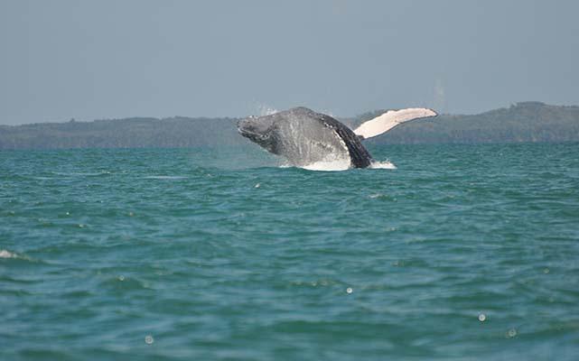safari-baleine-sainte-marielodge-madagascar-4